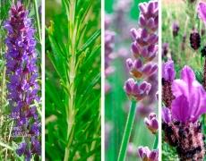 Taller de plantación de plantas y hierbas aromáticas
